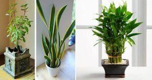 Apartment Plants shot